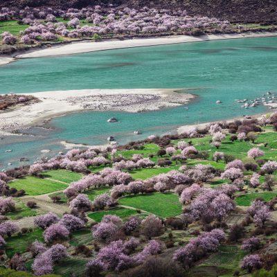 Brahmaputra River peach blossom