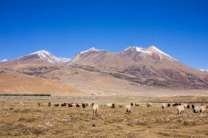 Qinghai Tibet Railway views in the Plateau