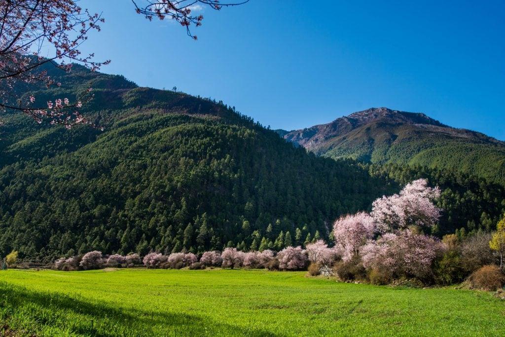 Peach blossom - spring views in Eastern Tibet