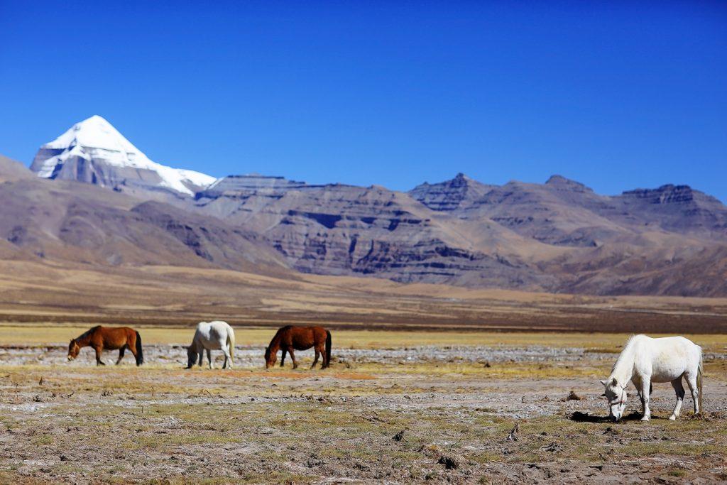 Horses grazing near Mount Kailash in Tibet
