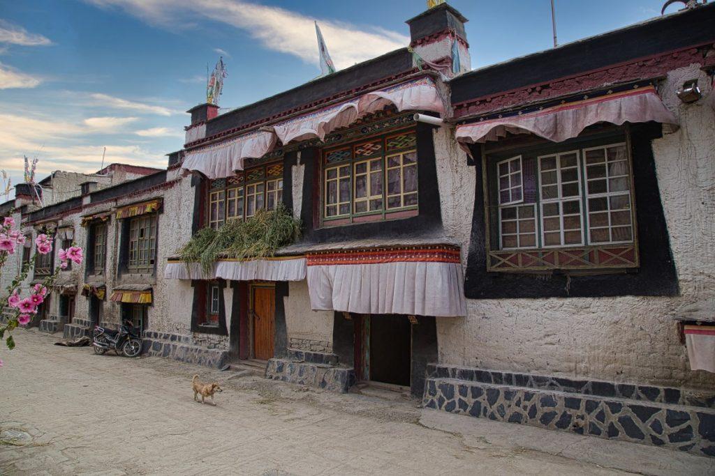 Dog running along the flower lined street in Gyantse, Tibet